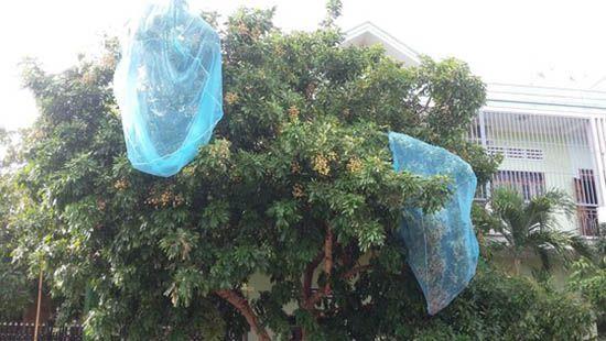 Màn chống muỗi làm lưới bọc trái cây