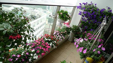 Một số loài hoa trồng trong tháng 6