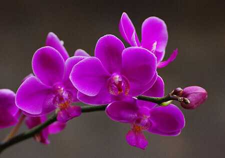 Tháng 6 trồng hoa Lan