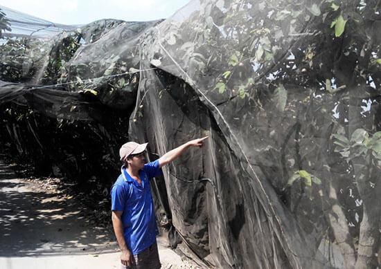 Trùm lưới cước bảo vệ vườn cây ăn quả