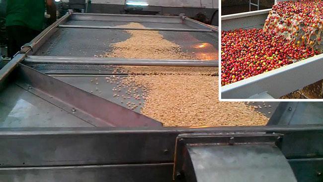 Phân loại hạt cà phê bằng lưới sàng